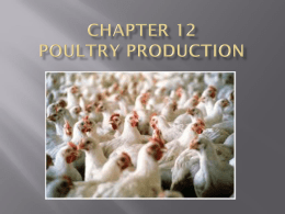 Chapter 12 Poultry Production