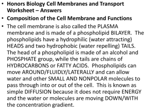 Cells and Transport Worksheet Answers