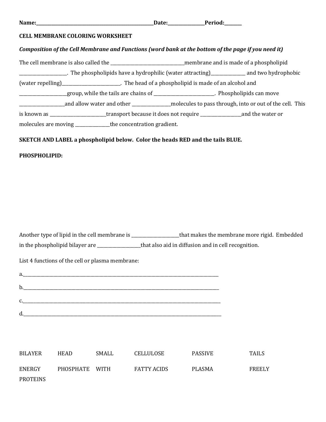 File – Cell Membrane Coloring Worksheet Answer Key