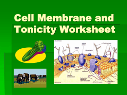 Cell Tonicity Powerpoint