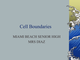 Cell membrane and Transport - Miami Beach Senior High School
