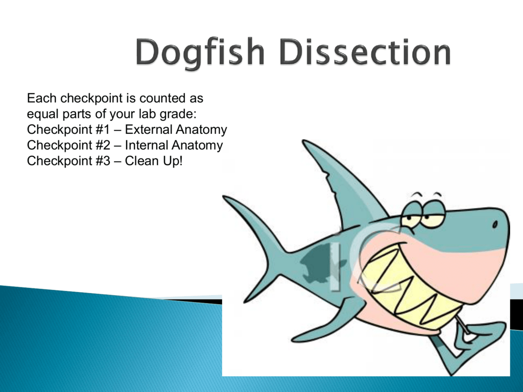 Shark Dissection
