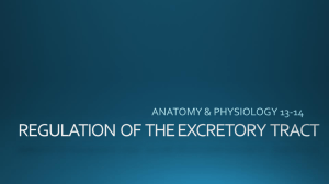 REGULATION OF THE EXCRETORY TRACT