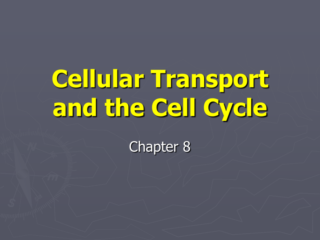 0091962111a41fc8ce20c5bdcc66cfc0ffc8127288png – Cellular Transport and the Cell Cycle Worksheet Answers