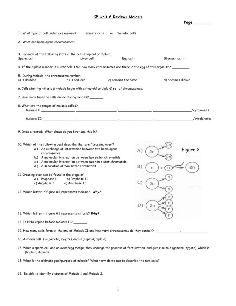 Meiosis Review Worksheet