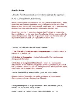 Genetics Matching Worksheet