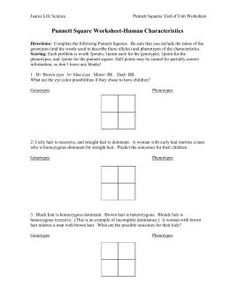 punnett square worksheet. Black Bedroom Furniture Sets. Home Design Ideas