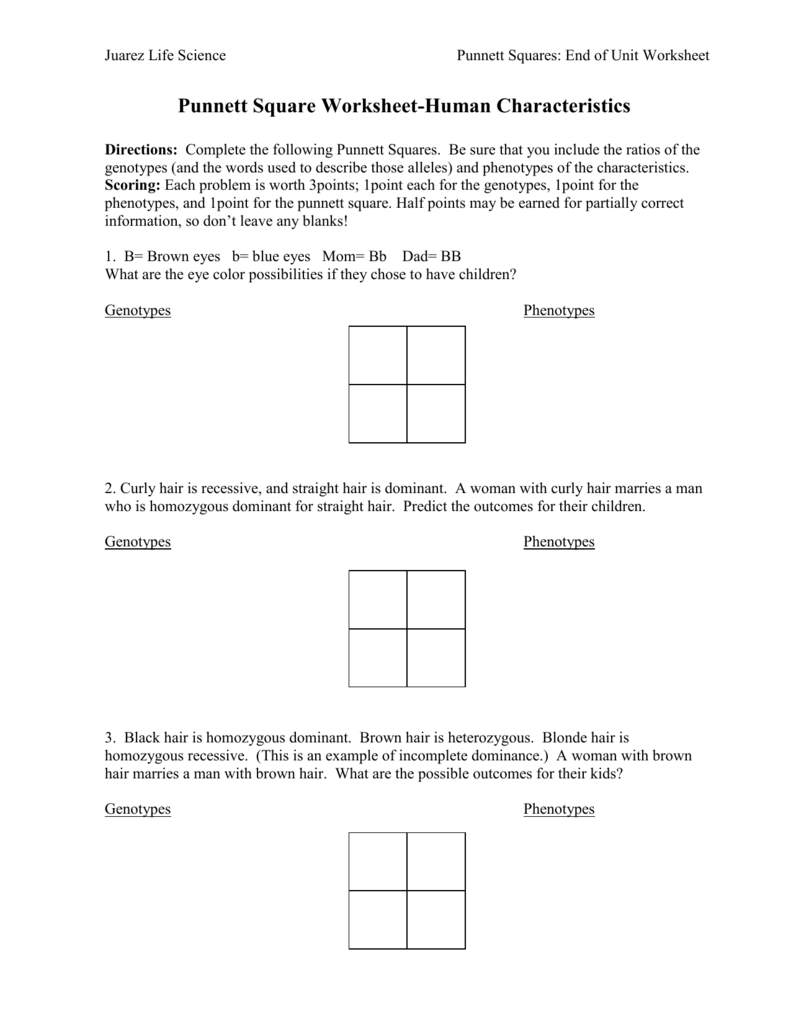 Punnett Square Worksheet – Punnett Square Worksheet