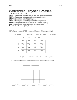 Dihybrid-cross-WS - HighMark Charter School