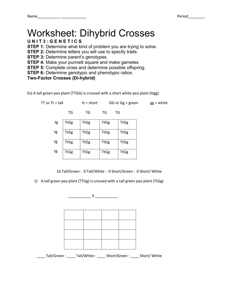 Worksheet Dihybrid Crosses
