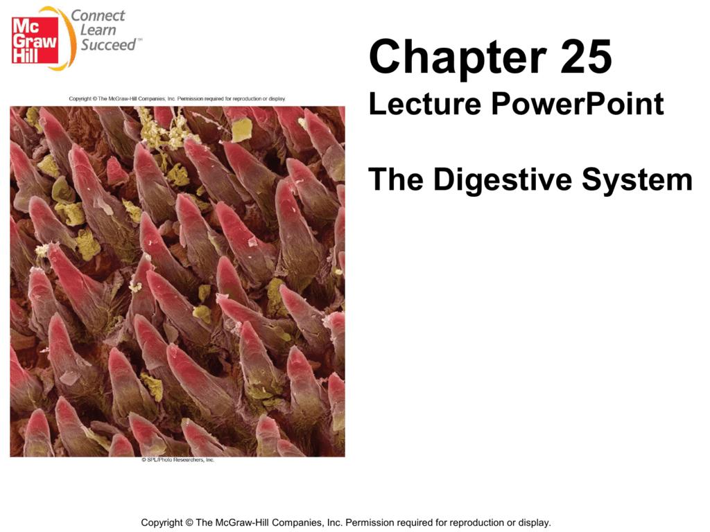 Chapter 25 – Saladin