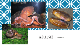 Notes on Mollusks Ch.16