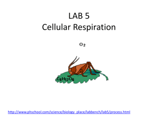 LAB 5 Cellular Respiration - local.brookings.k12.sd.us