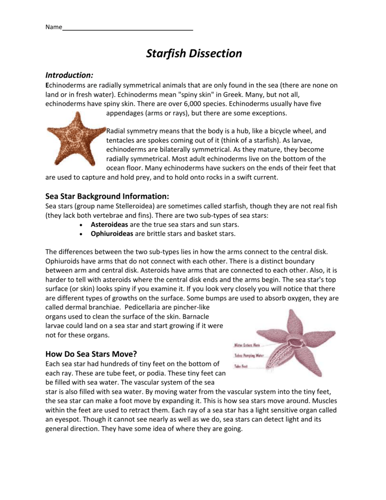 Uncategorized Starfish Dissection Worksheet 009209920 1 65ed82eb1688eb4c19419be8cc194530 png