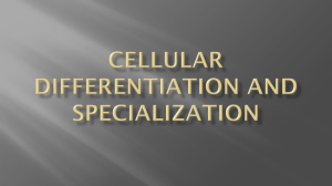 Cellular Differentiation and Specialization