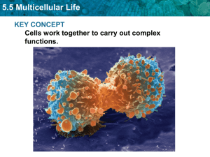 5.5 Multicellular Life