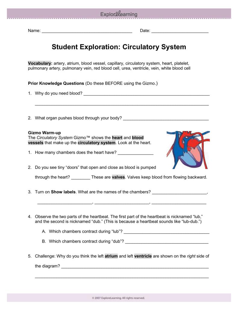 Circulatory System Gizmo