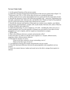 Nervous I Study Guide 1. List the general functions of the nervous