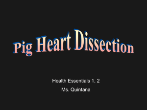 Heart Dissection Pre-Lab