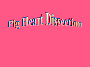 Heart Dissection 101