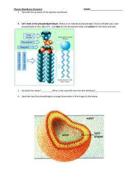 Membrane structure and function study guide