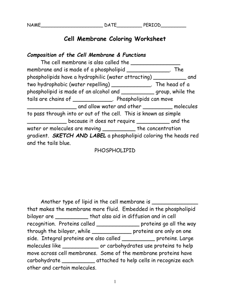 worksheet The Role Of Membranes In Cells Worksheet cell membrane coloring worksheet composition of the cell