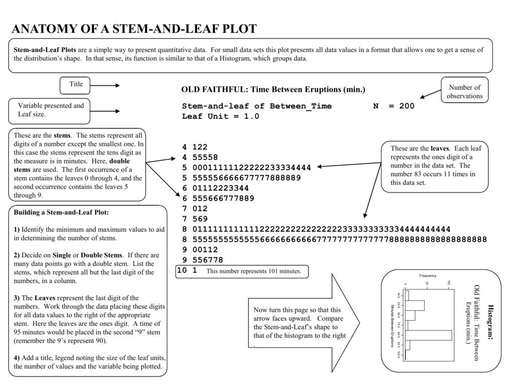 Anatomy: Stem and Leaf Plot