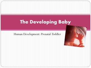 The Developing Baby
