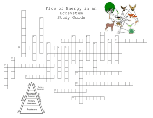 Flow of Energy Study Guide