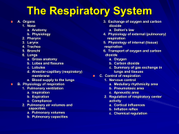 Powerpoint 22 Respiration