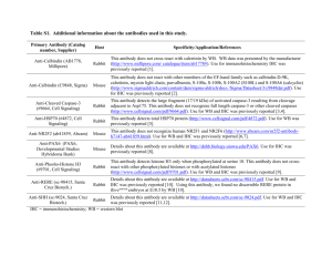 Table S1. Additional information about the antibodies used in this
