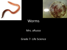 Worms - Mrs. aRusso's 7th/8th Grade Science Site!