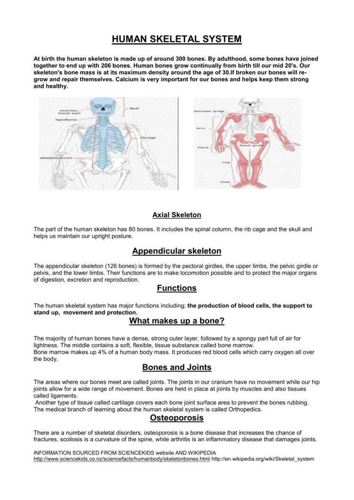 why is the skeletal system important