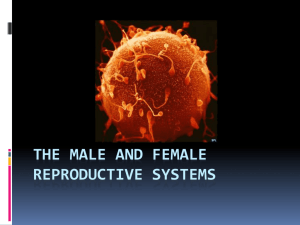 7th The Male and Female Reproductive Systems
