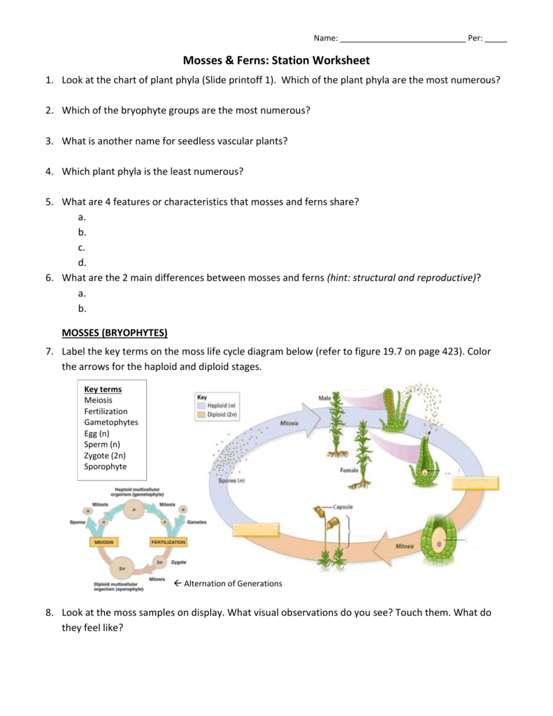 worksheet for first grade life cycle moss worksheet best free printable worksheets. Black Bedroom Furniture Sets. Home Design Ideas