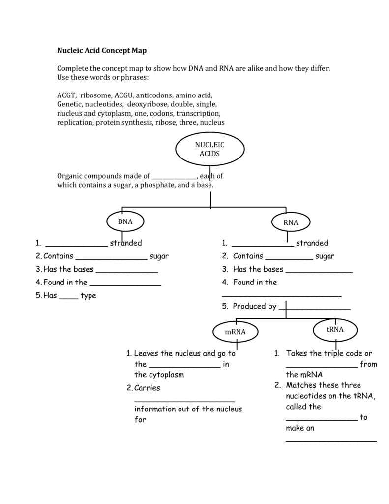 Nucleic Acid Concept Map Complete the concept map to show how
