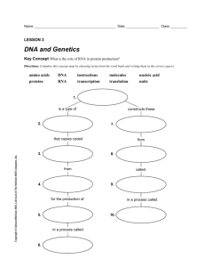 Template DNA RNA Study Guide