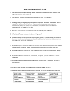 muscle contraction internet activity answer key