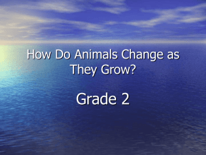 How do animals change as they grow? Grade 2, Denna Stroud