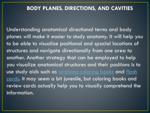 NEW Body Planes, directions, and cavities Rev 2013
