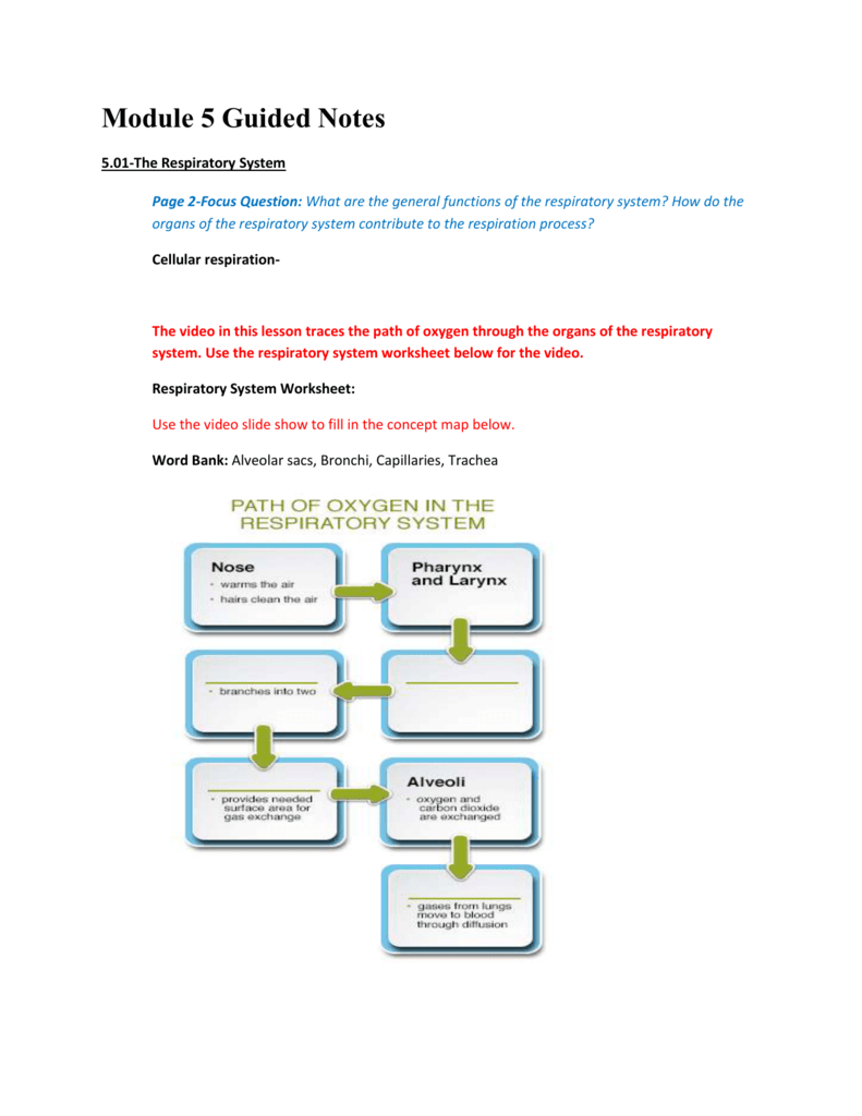 Module 5 Guided Notes