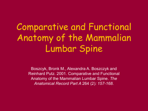 Comparative and Functional Anatomy of the Mammalian Lumbar