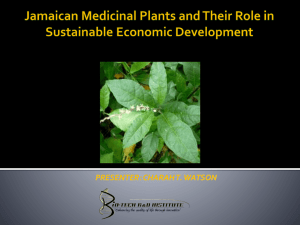 Jamaican Medicinal Plants and their Role in Sustainable Economic