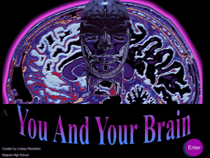 You and Your Brain - Harvard University
