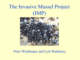 The Blue Mussel Project