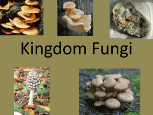 Kingdom Fungi Powerpoint