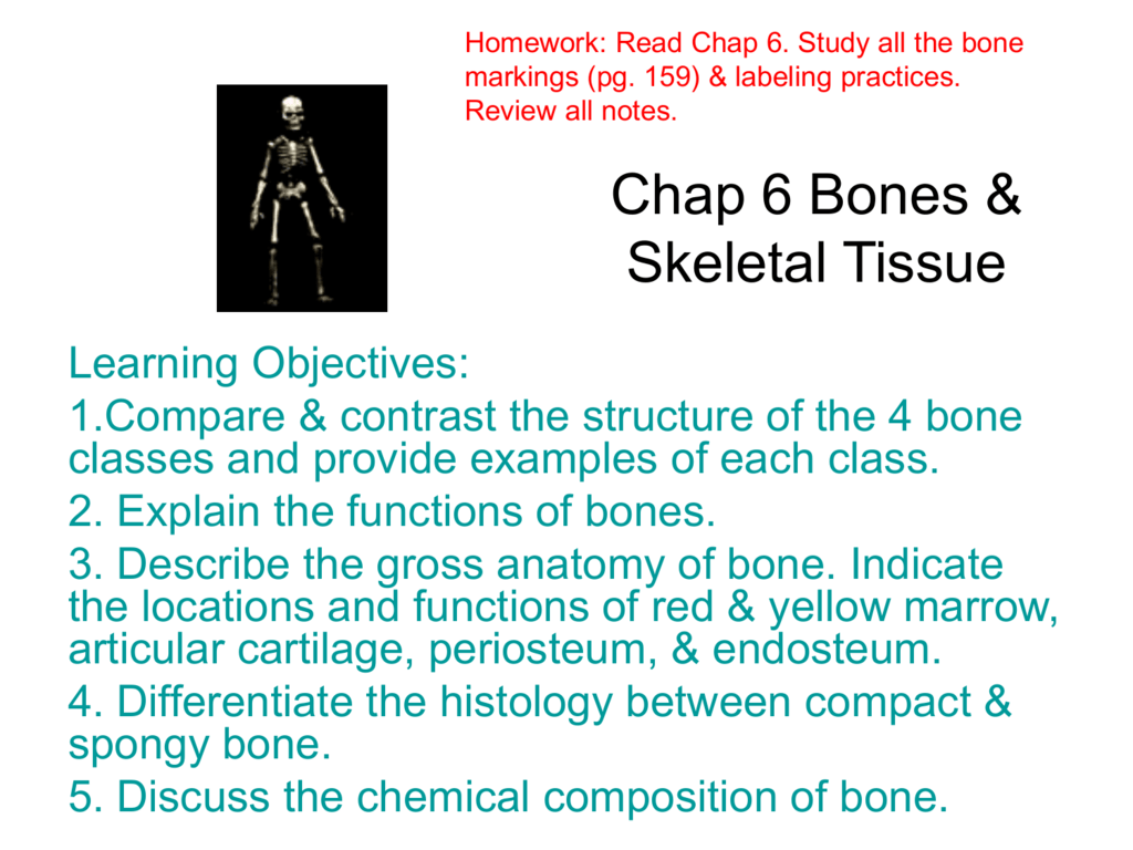 Chap 6 Bones Skeletal Tissue