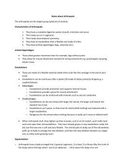 science lesson plan 6 What Are Echinoderms Echinoderms List