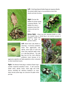 Beneficial Insects in Your Rose Garden