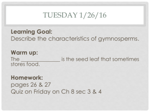 Chapter 8 Section 4 Gymnosperms
